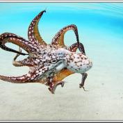 photo - octopus