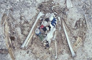 photo albatross_chick_remains