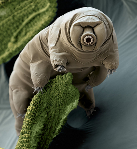 photo- Images of Evolution's Extreme Oddities