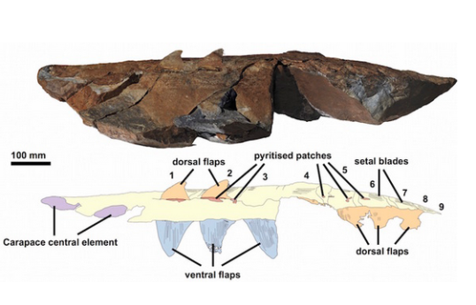 photo-Photos_ Ancient Sea Monster Was One of Largest Arthropods- Fossil
