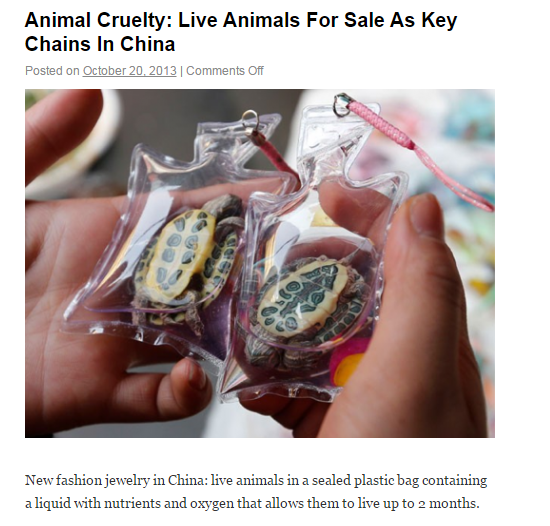 photo-Animal Cruelty_ Live Animals For Sale As Key Chains In China _ Crazy News