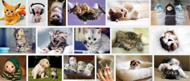 photo-Google  Images