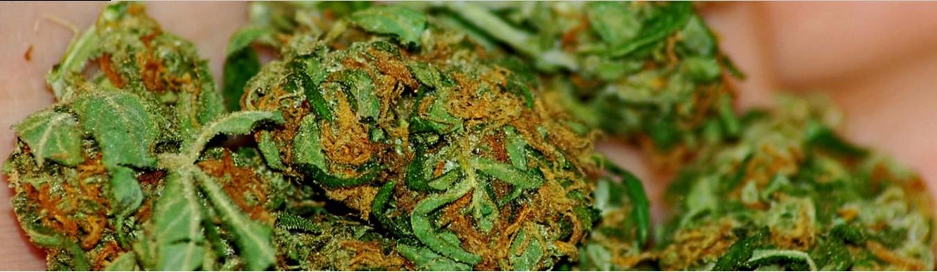 photo-Image via Flickr -Marijuana