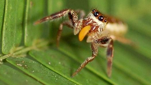 photo-www.rantpets.com Bagheera Kiplingi