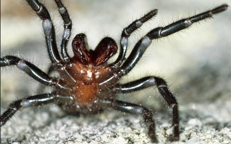 photo-Sydney Funner-Web Spider www.telegraph.co.uk